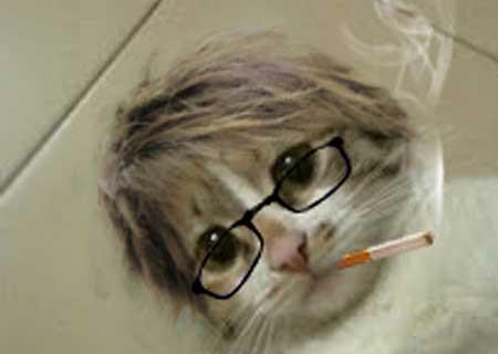 [Quick Tutorials] Hot Cat with Korean Style