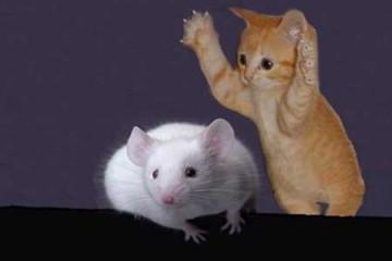 Những bức ảnh ghép độc đáo từ con mèo