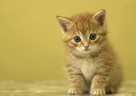 Contest XI [Cute Cat]