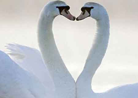 Những hình trái tim kỳ lạ vô tình xuất hiện từ tạo hóa