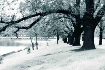 Biến hóa bức ảnh trở thành khung cảnh mùa đông lạnh giá