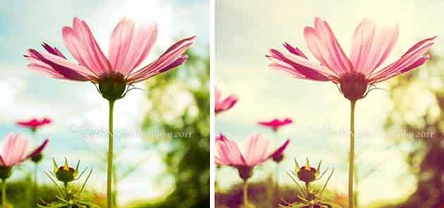 Blend màu tím hồng lãng mạn - Violet Shine